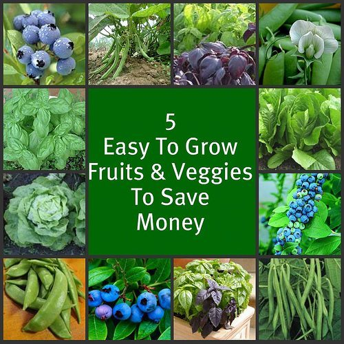 Save over $500 on produce this summer - 5 easy-to-grow Fruits & Vegetables that will save your family a bundle
