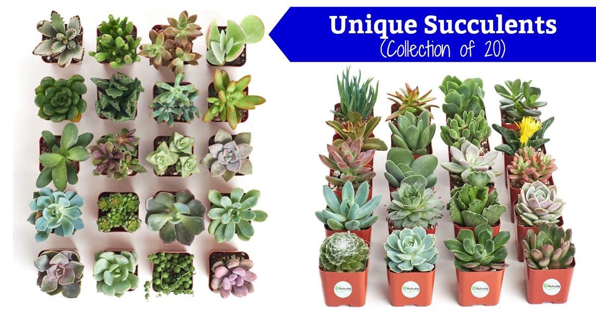 Unique Succulent Collection Of 20 On